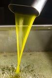 Olio d'oliva vergine extra Fotografia Stock