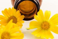 Olio dal fiore del calendula Fotografia Stock Libera da Diritti