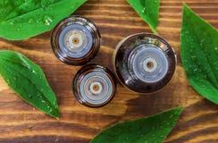 Olio dei sistemi dell'albero del tè in una piccola bottiglia calda immagini stock