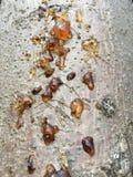 Olio dell'albero Fotografia Stock