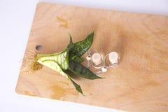 Olio dell'aroma Fotografia Stock Libera da Diritti