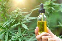Olio di canapa, bottiglia della tenuta della mano dell'olio della cannabis contro la pianta di marijuana, pipetta dell'olio di CB fotografie stock libere da diritti