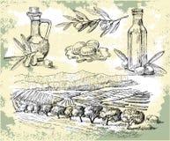 Olio di oliva illustrazione vettoriale