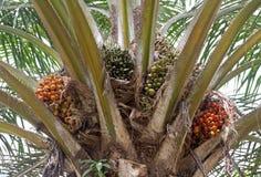 Olio di palma, un olio da tavola sano ben equilibrato immagine stock libera da diritti