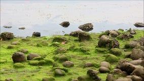 Olio ed inquinamento sul litorale muscoso archivi video