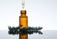 Olio essenziale con le foglie del timo, in bottiglia di vetro ambrata con il contagoccia immagini stock libere da diritti