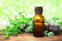 Olio essenziale del timo del timo sul fondo delle piante e dei fiori fotografia stock libera da diritti