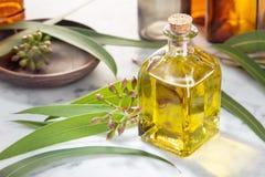 Olio essenziale dell'eucalyptus Essenza d'eucalipto sulla bottiglia di vetro con il contagoccia Il perforatum di erbe di Medicine fotografie stock