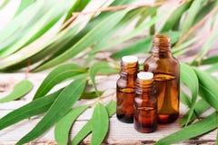 Olio essenziale dell'eucalyptus nella bottiglia ambrata immagine stock libera da diritti