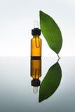 Olio essenziale della baia, olio d'alloro, foglia di alloro, bottiglia di vetro ambrata, contagoccia Immagine Stock Libera da Diritti