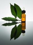 Olio essenziale della baia, olio d'alloro, foglia di alloro, bottiglia di vetro ambrata, contagoccia Fotografie Stock