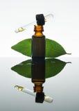 Olio essenziale della baia, olio d'alloro, foglia di alloro, bottiglia di vetro ambrata, contagoccia immagini stock