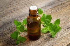 Olio essenziale di menta piperita in una piccola bottiglia con la menta fresca Immagine Stock Libera da Diritti