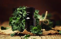 Olio essenziale organico dell'origano in un barattolo di vetro e un mazzo di fres fotografia stock libera da diritti