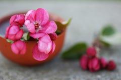 Olio essenziale per aromatherapy Fotografia Stock