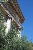 Oliv lämnar framme av den grekiska templet Royaltyfri Bild