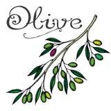 Oliva Fotografie Stock