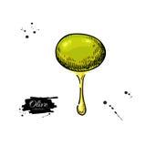 Oliva con goccia dell'olio Illustrazione disegnata a mano di vettore Fotografie Stock