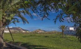 Oliva Fuerteventura Las Palmas Canary för palmträd- och bergsiktsLa öar Spanien Arkivfoton