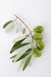 Oliva verde immagini stock