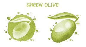 Oliva verde Acquerello originale Fotografia Stock Libera da Diritti