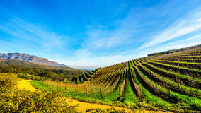 Olivares y viñedos rodeados por las montañas a lo largo del camino de Helshoogte Imagen de archivo