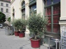 3 olive Fotografia Stock