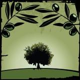 Olive Stock Image