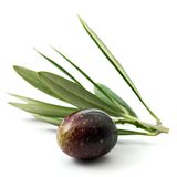 Olive Royalty Free Stock Photography