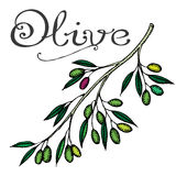 Olive Photos stock