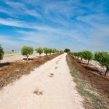 Olive Alley Royalty Free Stock Photography