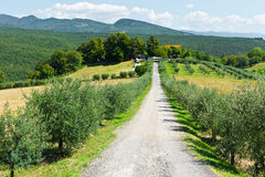 Olive Alley Royalty Free Stock Photos