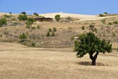 Olive-arbre Image libre de droits
