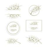 Olive or Argan Oil Design Set Stock Photo