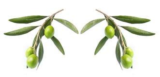 Olive auf Zweig lizenzfreies stockfoto