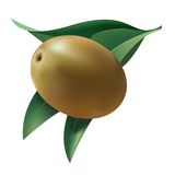 Olive on the background of their leaves. Isolated Stock Photo