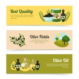 Olive Banners Set Stock Photography