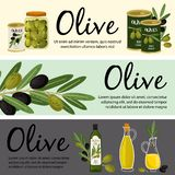 Olive banners template. Olive organic products and plant vector illustration. Product oil fruit, plant ripe olive organic vector illustration
