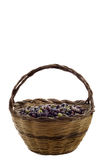 Olive Basket. A typical sardinian handmade reed basket full of freshly picked organic olives, white background, copy-space, shallow DoF, focus on the olives Stock Images