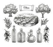 Olive big set. Stock Image