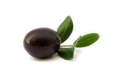 Olive black with green leaves Stock Image