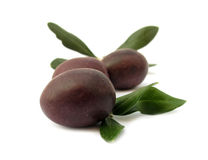 Olive black med gröna leaves arkivfoto
