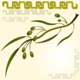 Olive Branch Fotografía de archivo libre de regalías