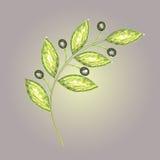 Olive branch. Crystal emblem of olive branch– symbol of peace Stock Photo