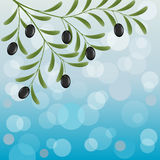 Olive branch. Floral background with an olive branch. Vector illustration Stock Photo