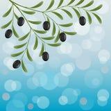 Olive branch. Floral background with an olive branch. Vector illustration stock illustration