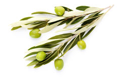 Olive branch. On white background - food and drink Royalty Free Stock Images