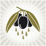 Olive branch. Vector olive branch in retro style vector illustration