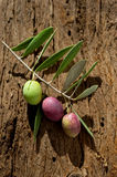 Olive branch. On wood background Royalty Free Stock Image