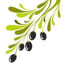 Olive branch Royalty Free Stock Photography